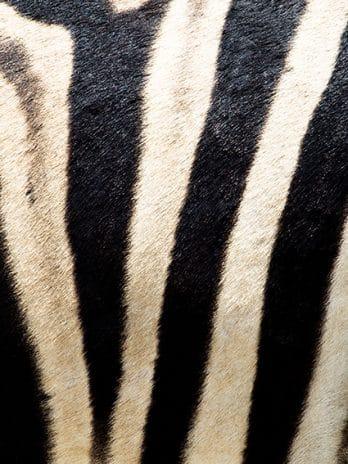 016.27 Zwart op wit