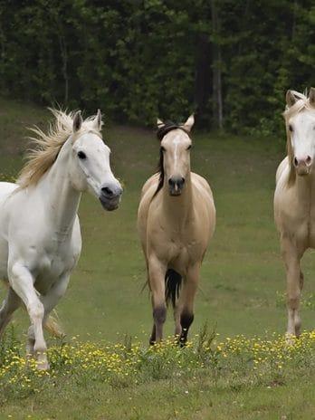 005.13 Paarden