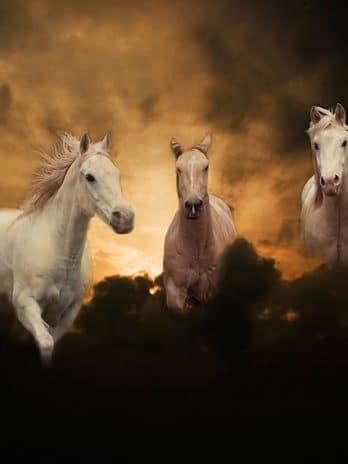 005.22 Paarden in de nacht