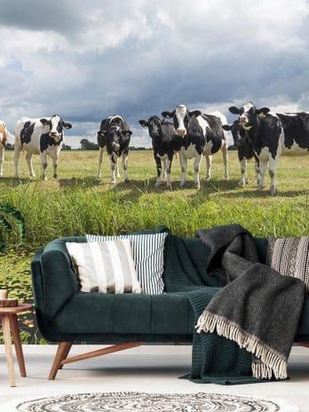005.28 Hollandse koeien