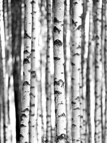 009.60 Door de bomen het bos niet meer zien