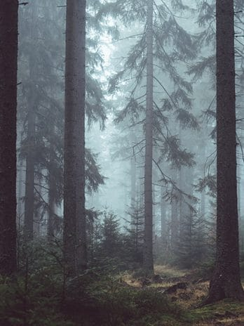 009.63 Mystery Forest