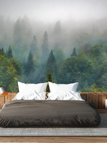 009.64 Misty Forest