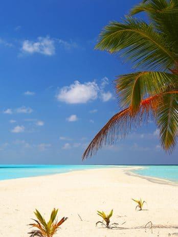 013.14  Tropical Beach