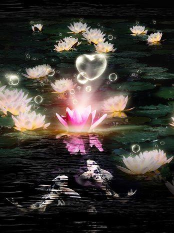 Waterlelie love – Fantasie